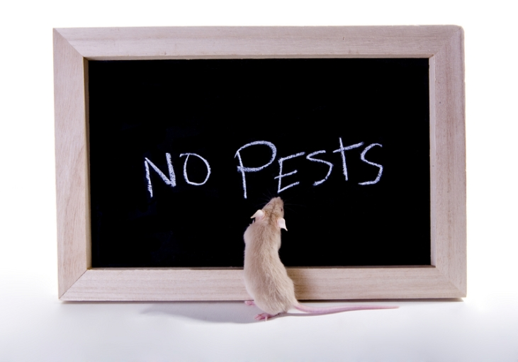 no-pests